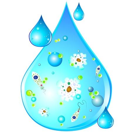 contaminacion del agua: Los microbios en gota de agua sucia
