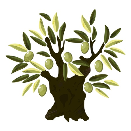 Big old olive tree with leaves and fruits over white Vector