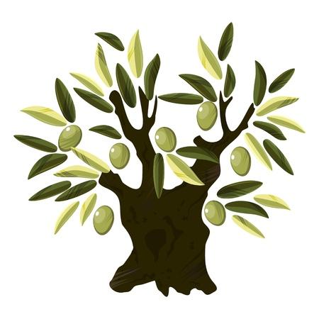 olijf: Grote oude olijfboom met bladeren en vruchten op witte Stock Illustratie