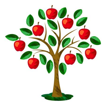 arbol de manzanas: Aislado árbol de manzana con hojas y frutos