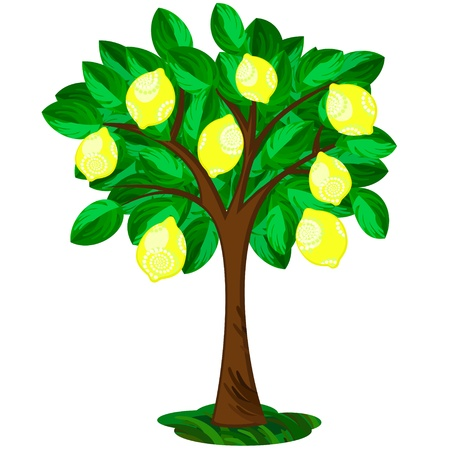Icon of single lemon tree with ornate fruits Vectores