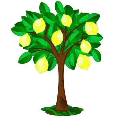limon caricatura: Icono de un solo árbol de limón con frutas adornadas