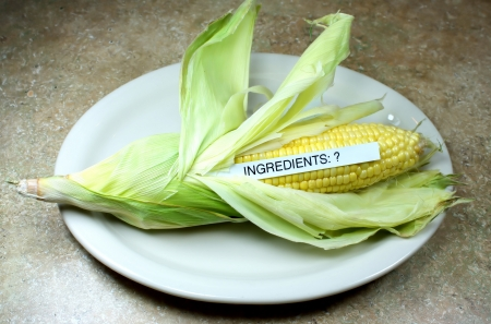 genetically: Corn concept is it natural or genetically modified Stock Photo