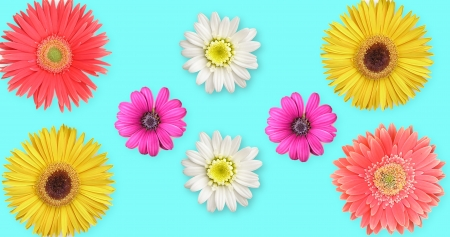 Illustration of multicolored dasies on blue background Stock Photo