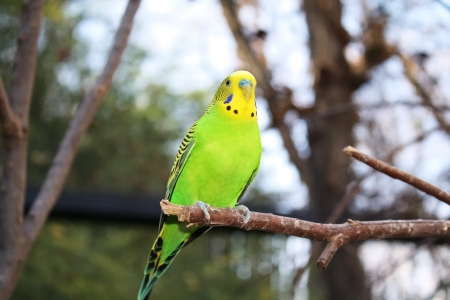 Beautiful green parakeet perched on a branch Stock Photo