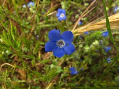 California wild flowers Banco de Imagens