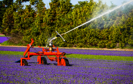 A powerful water jet spraying water onto a field of purple flowers