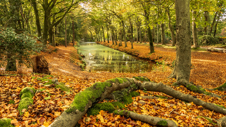 Autumn forest landscape scene rich in color Imagens