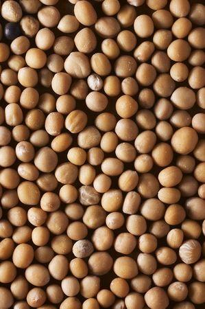 semen: La senape semina la struttura del primo piano