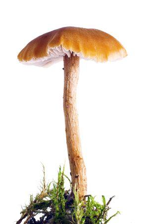 mushroom  isolated