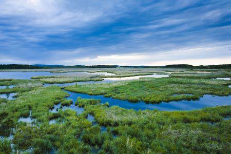 pantanos: Los pantanos de humedales del este de Finlandia Foto de archivo