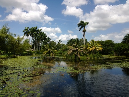 Tropical marsh in Playa Larga (Cuba)