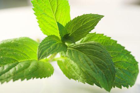 minty: fresh peppermint Stock Photo
