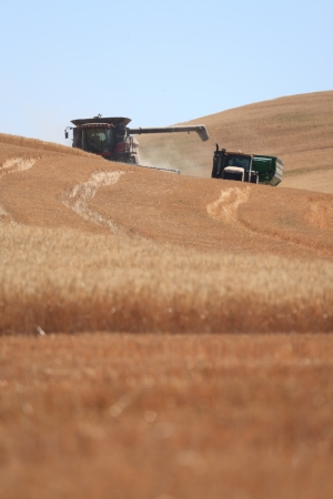 Wheat combine and wagon during harvest in Palouse, Washington