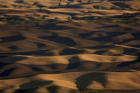 palouse: Alternate view of the Palouse landscape from Steptoe Butte during Fall harvest