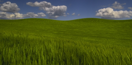Rolling green wheat fields and sky photo