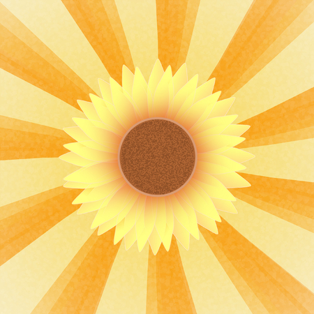 place mat: Blossom of a sunflower on a orange yellow sunray pattern in retro look in a square format Stock Photo