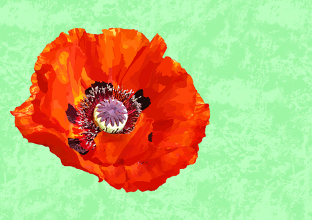 One painted red poppy blossom on a green patterned background in a landscape format with a large copy space on the right part