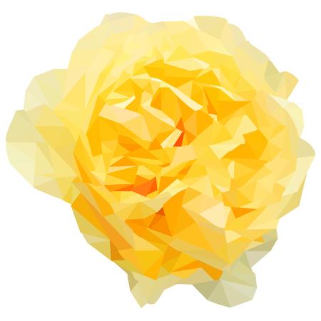 Gelbe Rose blühte aus Dreiecken geformt isoliert auf weiß
