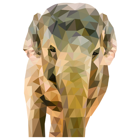 lifelike: Elephant formed of triangles on a white background in a square format