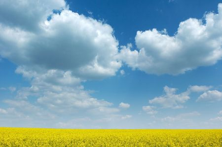 ecodiesel: Colza field in bloom under beautiful summer sky with white clouds, wide angle shot.