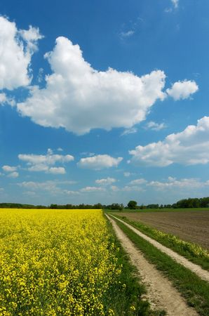 ecodiesel: Straight dirt road leading along colza field in bloom and freshly ploughed field Stock Photo