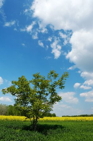 ecodiesel: A lone tree in a green field under beautiful summer sky with white clouds, yellow colza field and a group of trees in the background; verticalportrait orientation