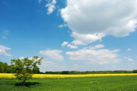 ecodiesel: A lone tree in a green field under beautiful summer sky with white clouds, yellow colza field and a group of trees in the background; horizontallandscape orientation Stock Photo