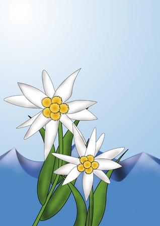 Edelweiss in front of an slpin scenery Standard-Bild