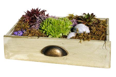 A flower pot with rock garden plants photo