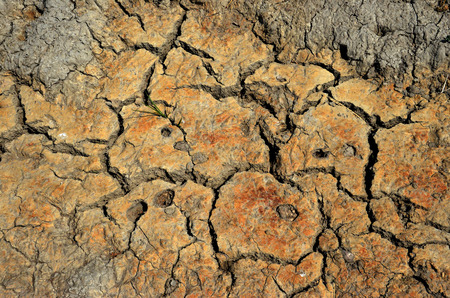 drained: A texture of dry loam