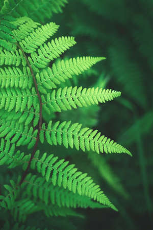 Juicy green branch of forest fern. Natural background for design.
