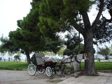 horse car in greece Stock Photo
