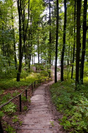 Green path going the lake side in the forest  poland
