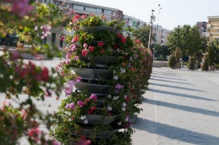 Flower pots and petunias square of the tulcea romania