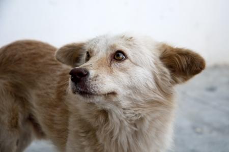 Romania street dog give a posing