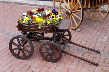 Wooden cart inside the flowers in capital ankara turkey photo