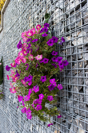 Purple Flowers on the Stone Cage  for a decoration on outdoor izmir,turkey Stock Photo