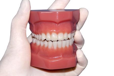 hand show teeth mold