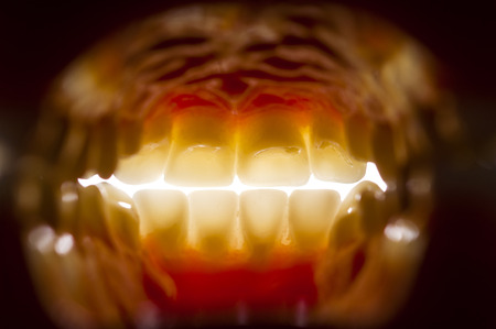 mouth cavity: oral cavity interior view mouth human teeth Stock Photo