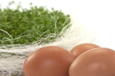 fresh eggs with green cress in basket photo