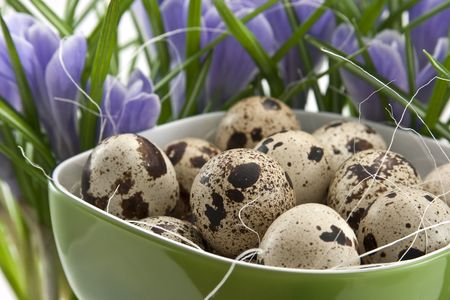 quail eggs in green cup with crocuses photo