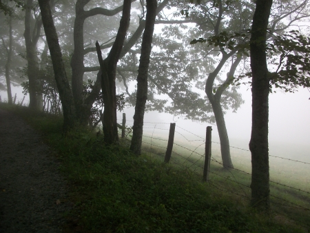 Moses Cone Carriage Trail - Blowing Rock, NC photo
