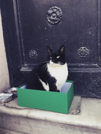 Cat in box. Istanbul, Turkey