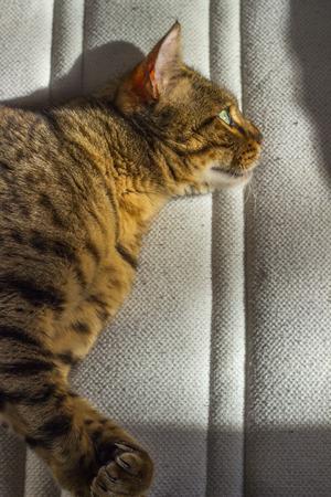 ojos verdes: Gato feliz rayas de color naranja con los ojos verdes