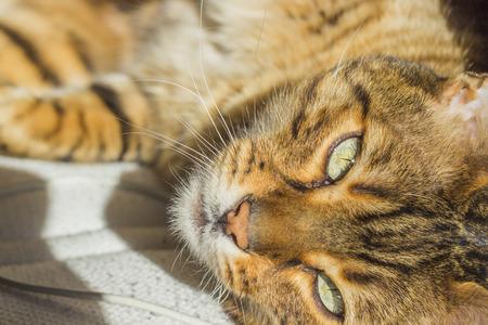 eyes green: Ojos verdes de un gato con rayas de color naranja Foto de archivo