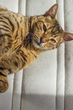 green eyes: Playful orange striped cat with green eyes