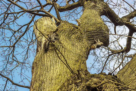 greenwich: Grey Squirrel on a tree in Greenwich Park in London. Stock Photo