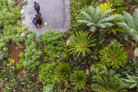 eye traveller: View from above in the Sky Garden at the top of the Fenchurch building in London, England. Visitors are relaxing in a small jungle.
