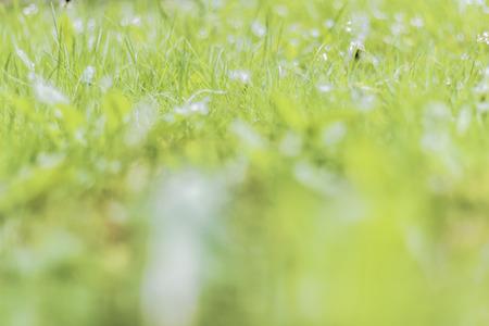 tiefe: Zusammenfassung Hintergrund Textur von Gras. Geringe Schärfentiefe. Lizenzfreie Bilder